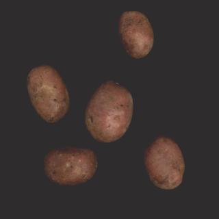 """Kartoffeln """"Senna"""" rotschalig festk."""