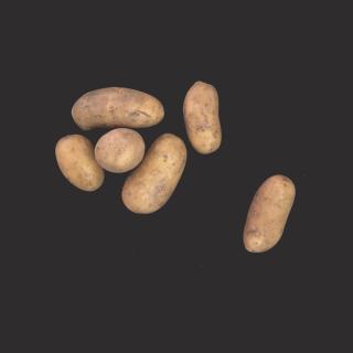 """Kartoffel """"Belana"""" festkochend"""