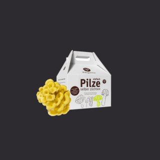Pilzzuchtset Limonenseitling