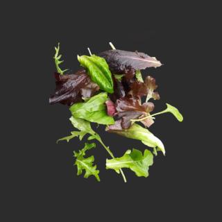 """Salatmix """"Wintermischung"""""""