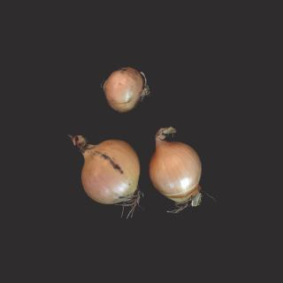 Zwiebeln gelb