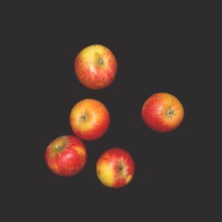 """Apfel """"roter Holsteiner Cox"""""""
