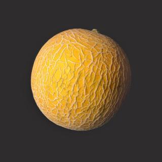 """Melone """"Galia"""""""