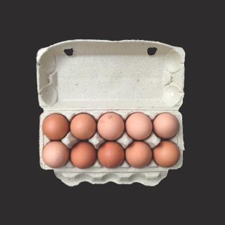 Bio-Eier 10er (demeter)