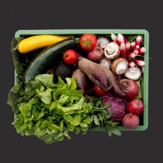Gemüse Biokiste mittel